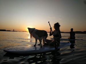 paddle dog surf vigo